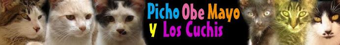 Pichito Obe y Mayo