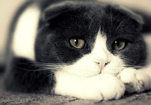 Gatto che pensa a come fare