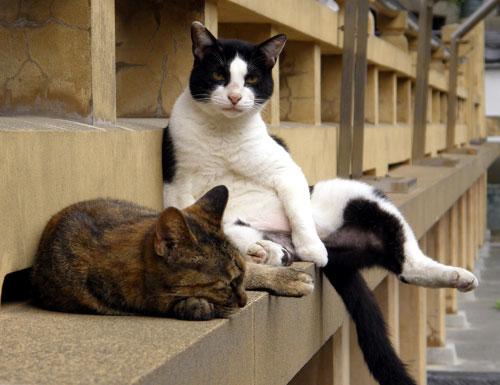 Gatti in pausa