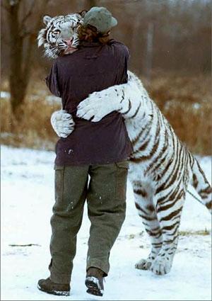 Cacciatore e tigre che non si vedevano da tanto tempo