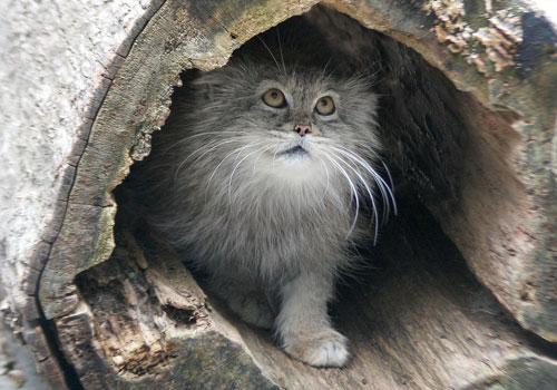 Gatto cavernicolo