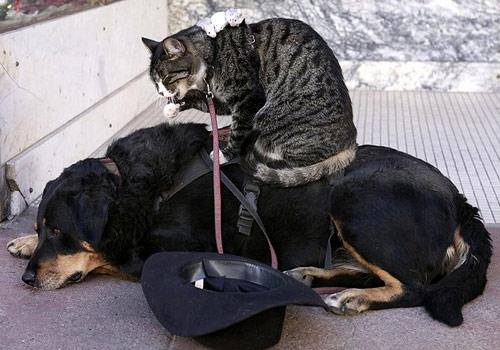 L'interminabile recriminazione del gatto