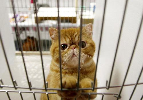 Gatto in attesa di giudizio