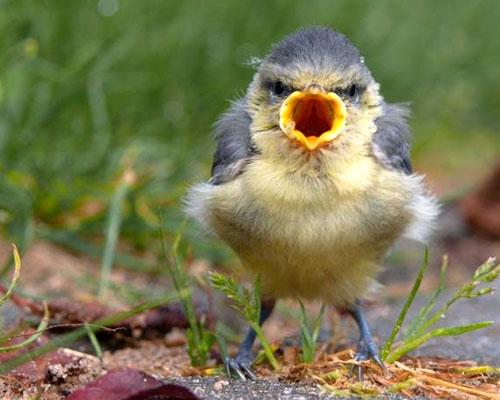 Uccello che pensa che l'avete fatto apposta