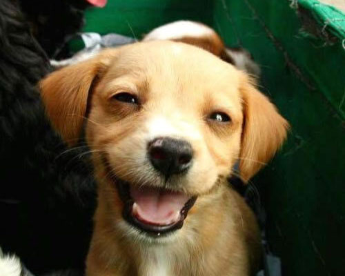 Cane che apprezza la battuta