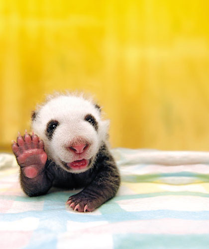 Piccolo panda che se ne va in ferie