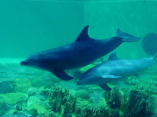 fakta om delfiner