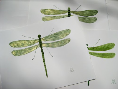 Dragonfly Drawing Images. Truly, the dragonfly was named