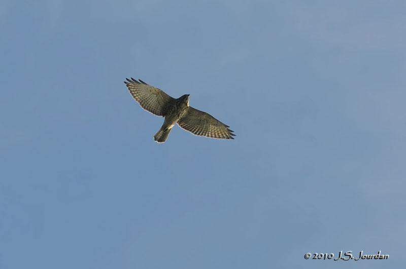 Jerry's Birding / Digiscoping Blog: October 2010