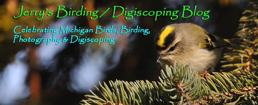 Jerry&#39;s Birding / Digiscoping Blog