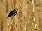 2009 Digiscoping Gallery