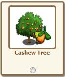 Yeni Hediye! Cashew Tree geldi!