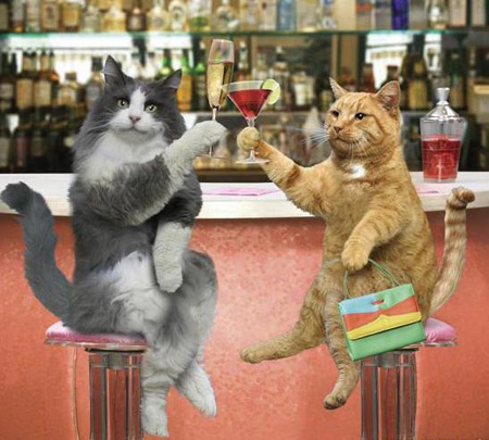 cats bar de copas: