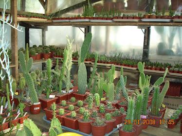 Plantas para la venta