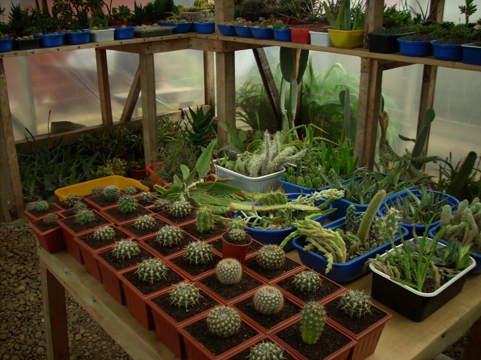 Vivero sanssouci plantaci n de cactus nuevos for Viveros en temuco