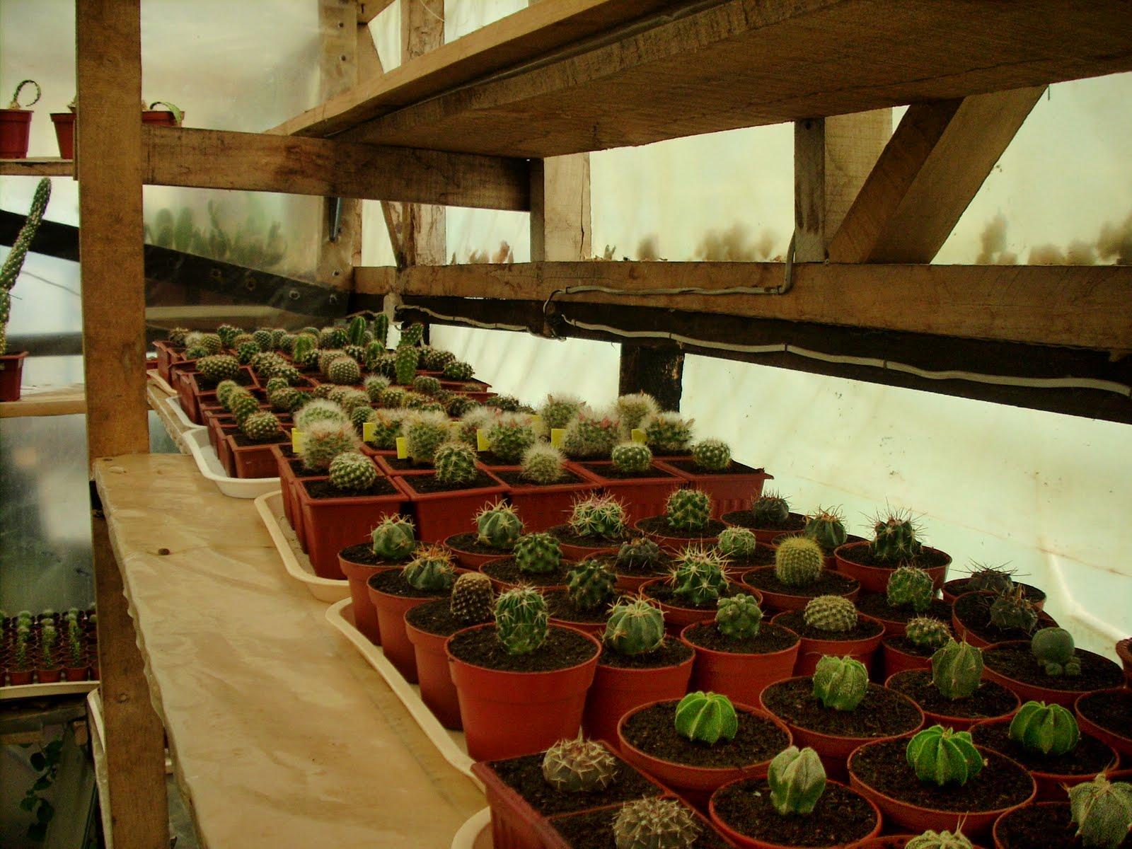 Vivero sanssouci cactus listos para expo primavera for Viveros en temuco