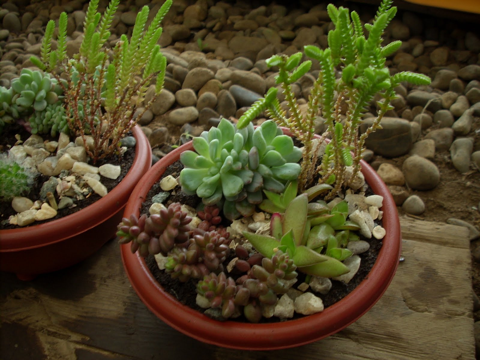 Vivero sanssouci productos presentados en expo primavera 2010 for Viveros en temuco