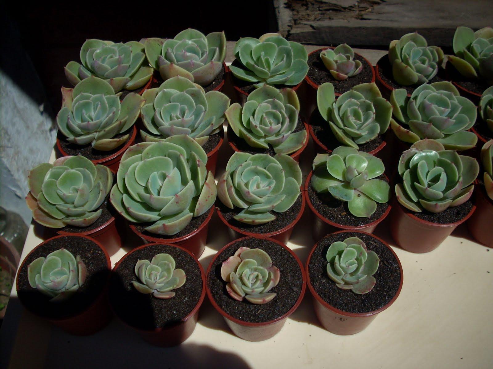 Vivero sanssouci pedido de plantas para punta arena for Suculentas chile