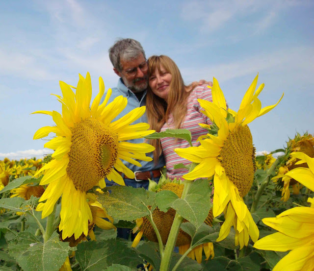 Ukrainian-Canadian honeymooners in sunflowers