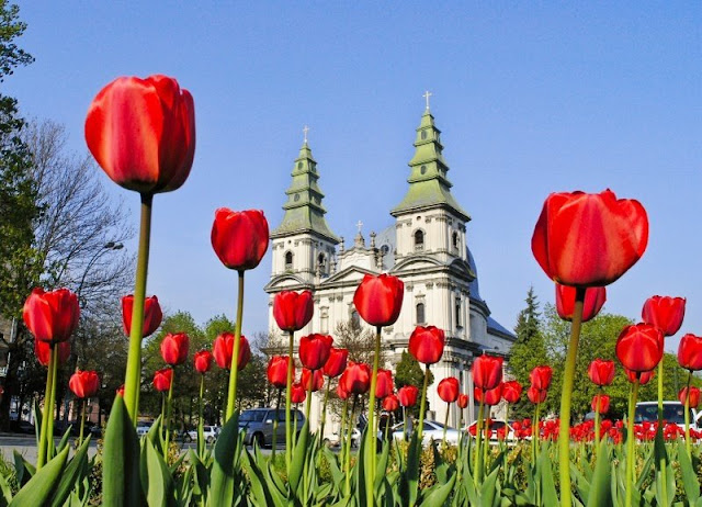 Ternopil West Ukraine Flowers Downtown May