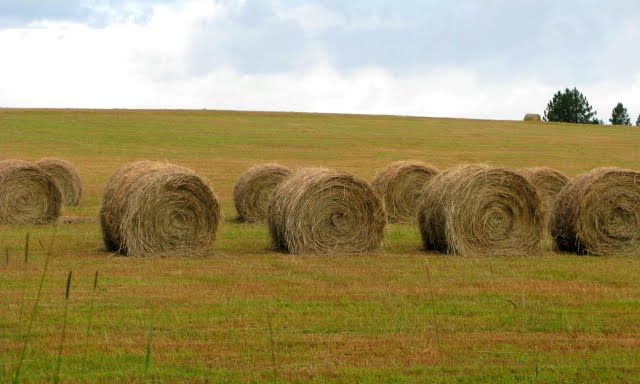 Hay Bales Done By Machine North America