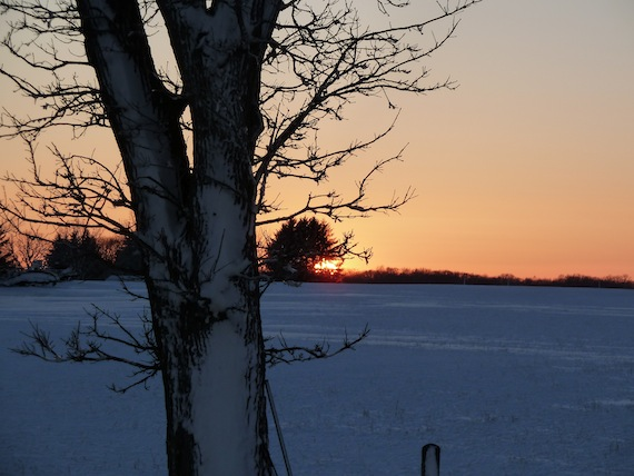 barren tree infront of a sunset in Wisconsin