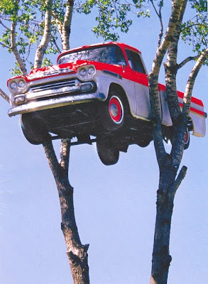 photo drole Car_in_tree