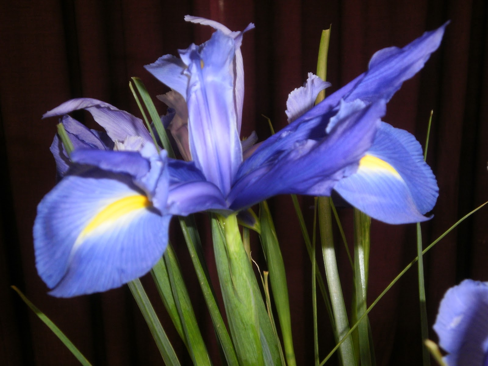 Flower Memes Purple Iris for Today s Flowers