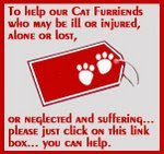 Help Our Cat friends