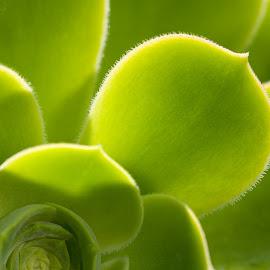 Gambar daun ukuran besar
