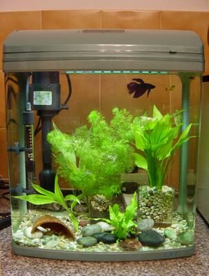 Bubbles bettas care for How to keep fish tank clean without changing water