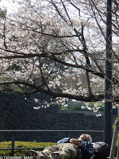 Taking a nap under the tree, Tokyo
