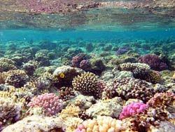 Pulau tidung terumbu Karang