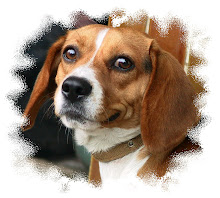 小欣的愛犬