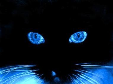 """""""""""""""... En azul..."""""""""""" - Página 12 Gato+azul"""
