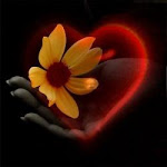 """""""Nunca devemos ser duros demais quando queremos que o coração do outro se abra."""""""