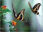 """""""O segredo não é correr atrás das borboletas.E sim cuidar do jardim para que elas venham até você."""""""