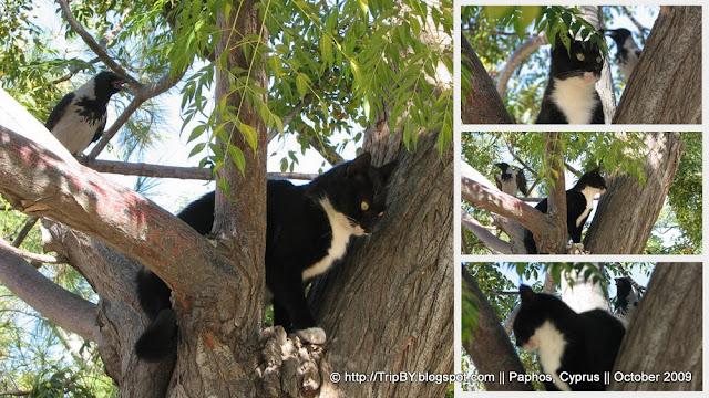 Кот и птица на дереве, коллаж by TripBY.info