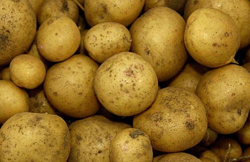 Hash Brown Potato Casserole | Frugal Follies
