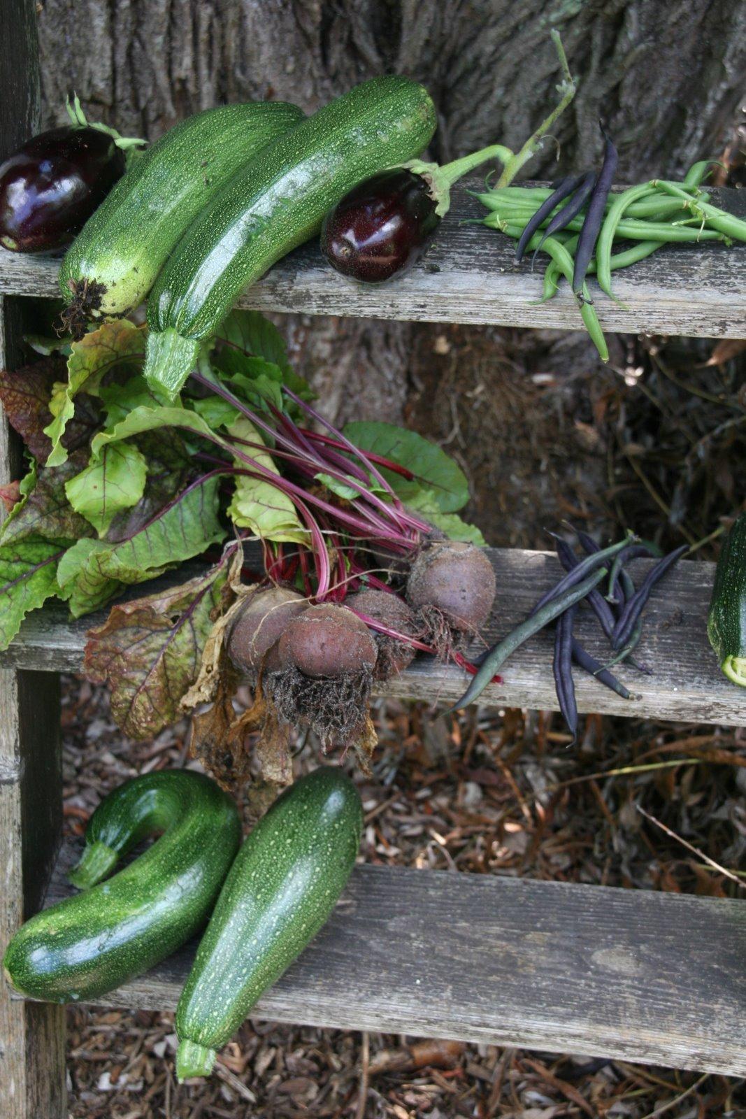 Kittie 39 s 100 idee n groenten tuin for Groenten tuin