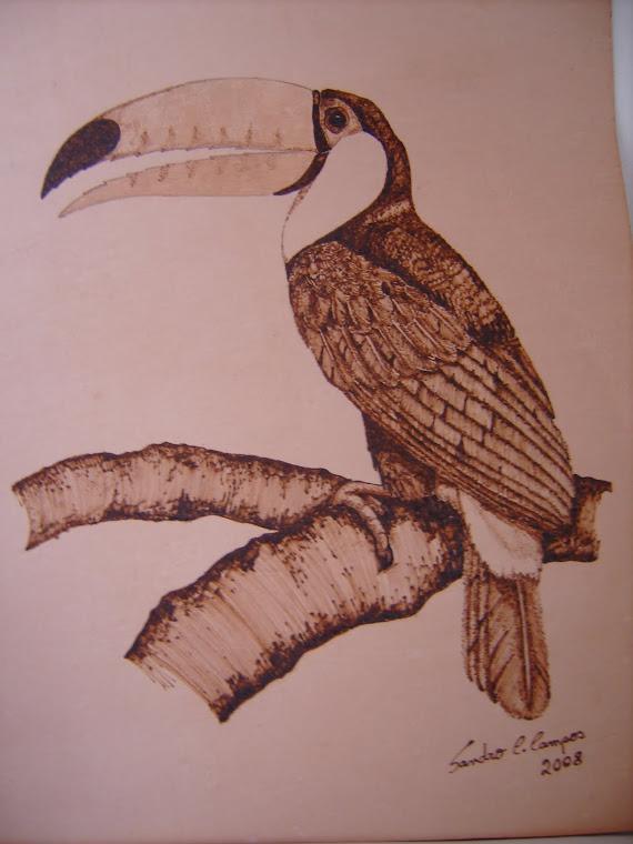 Tucano - Ramphastos toco