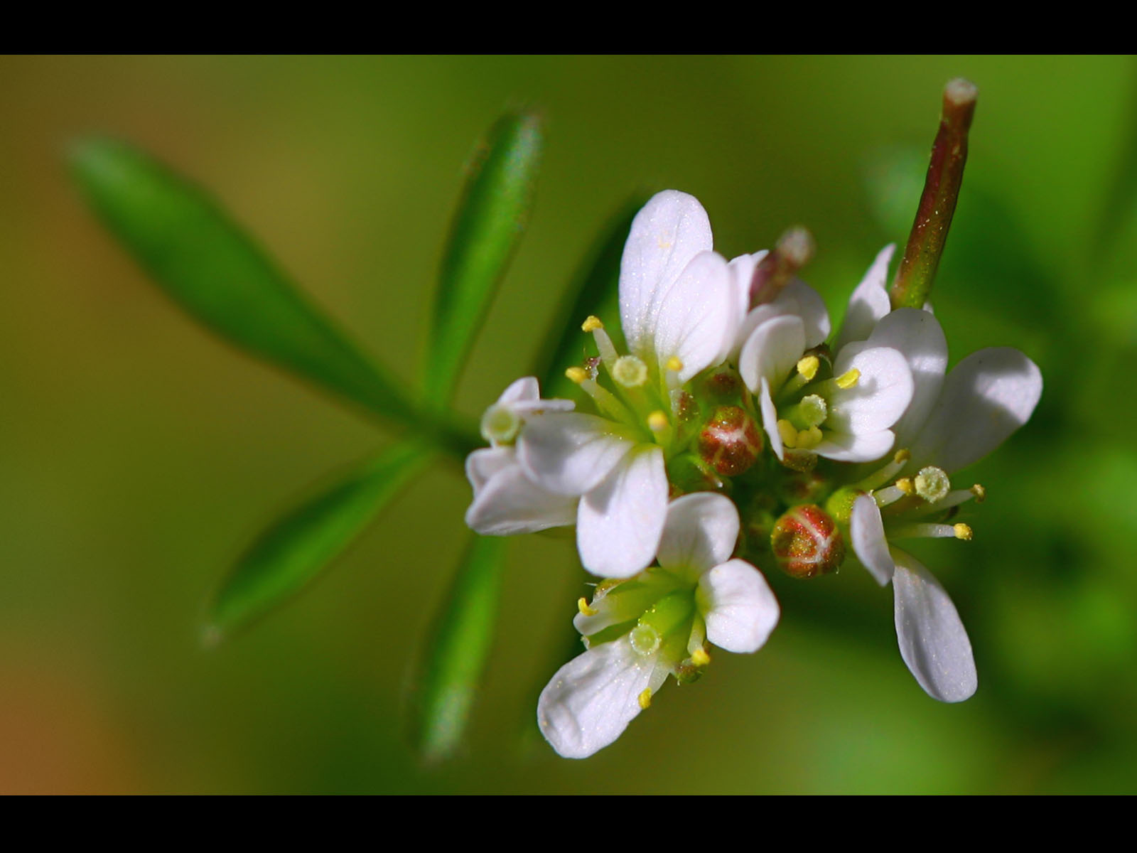 http://4.bp.blogspot.com/_vClfjdJc8Jk/TTsHOycHCtI/AAAAAAAAE0I/Ctrva6tCOOo/s1600/spring-flowers-wallpapers_12418_1600x1200.jpg