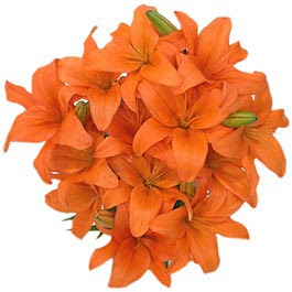 Narandzasta magija Orange-flowers