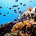 Top Scuba Diving Destinations
