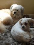 Toby & Lilla