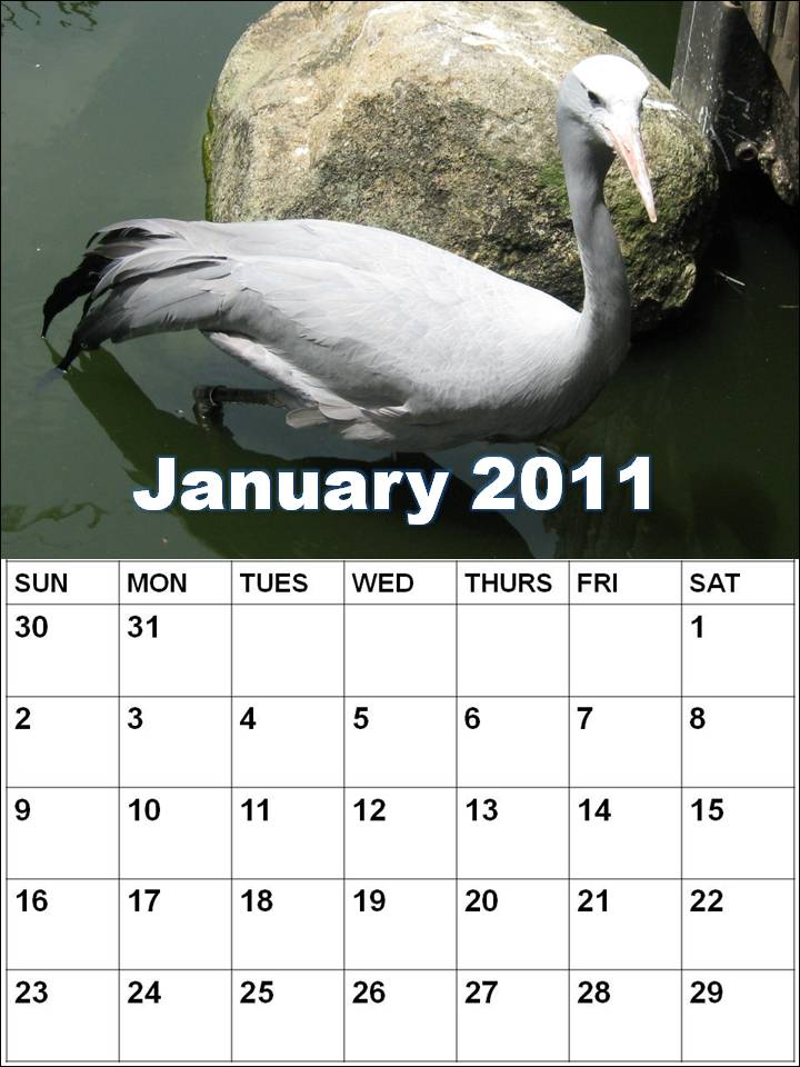 January 2011 Calendar Printable With Holidays. Blank Calendar 2011 January or
