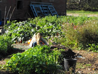 marlie planting in sun