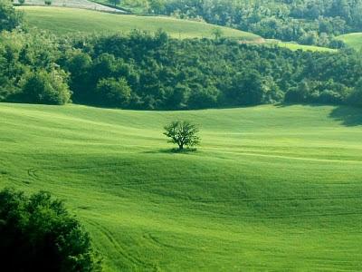 Albero al centro di un campo di grano