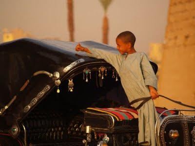 Nilo: giovane calessiere