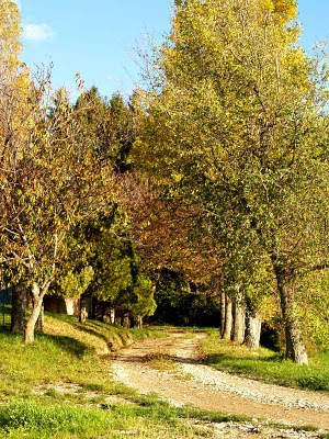 Strade di collina in autunno